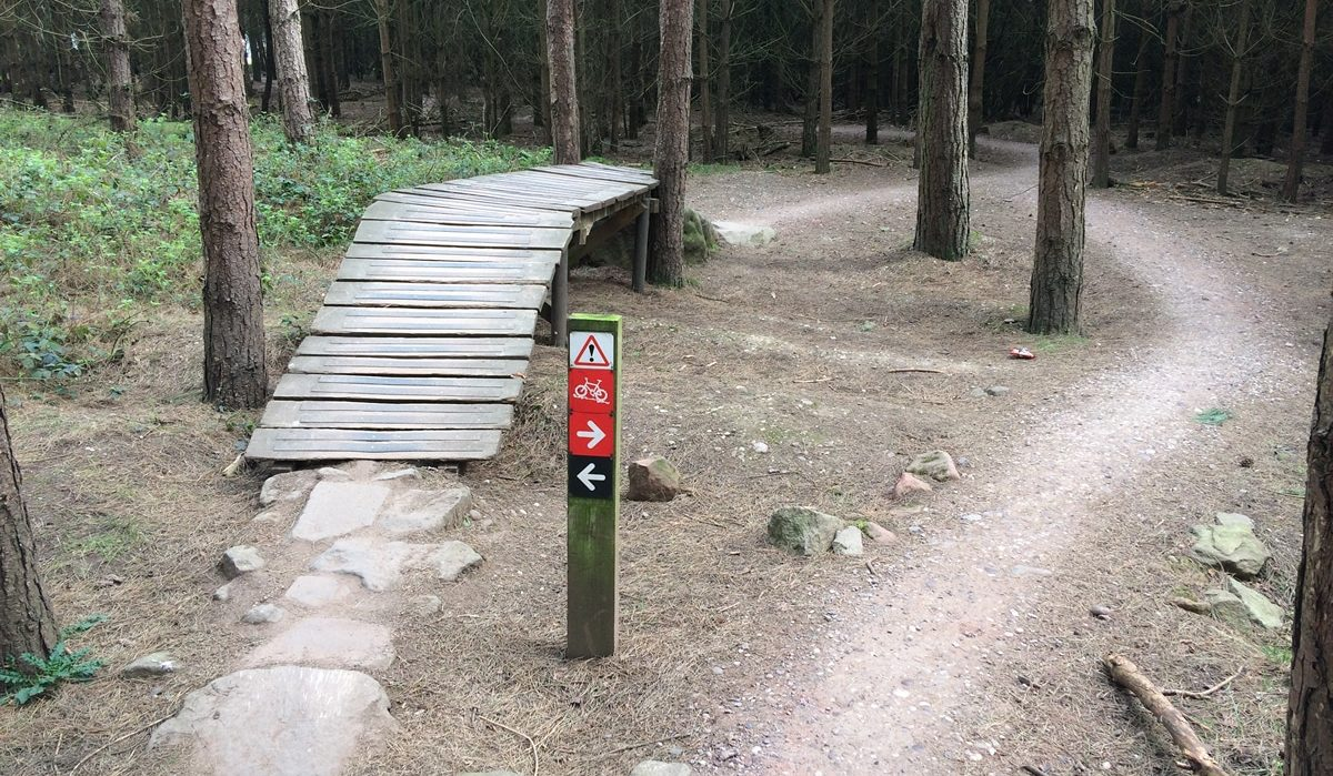 Cannock Chase Trails | Follow the Dog