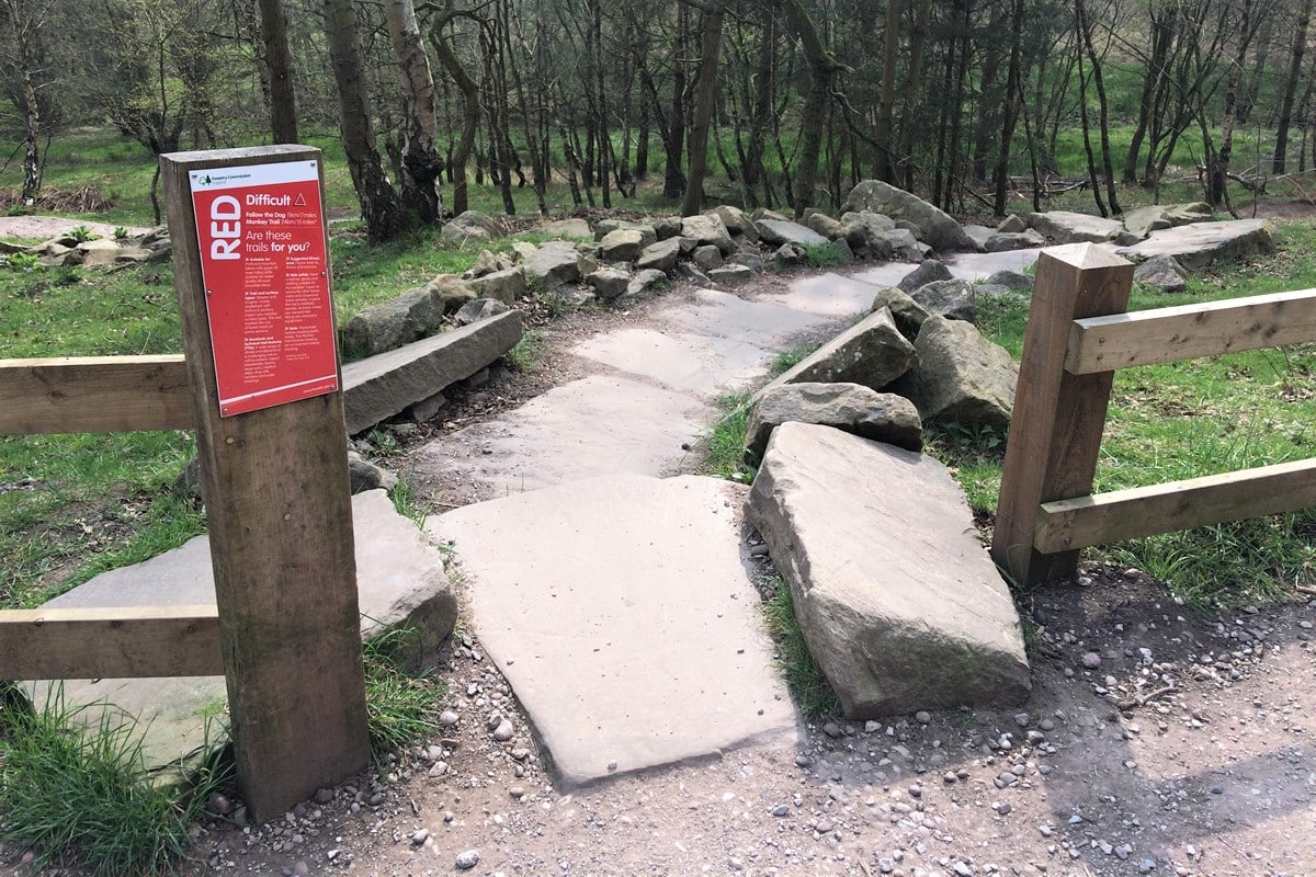 Cannock Chase Trails | Start of the Stegasaurus section on the Follow the Dog Trail