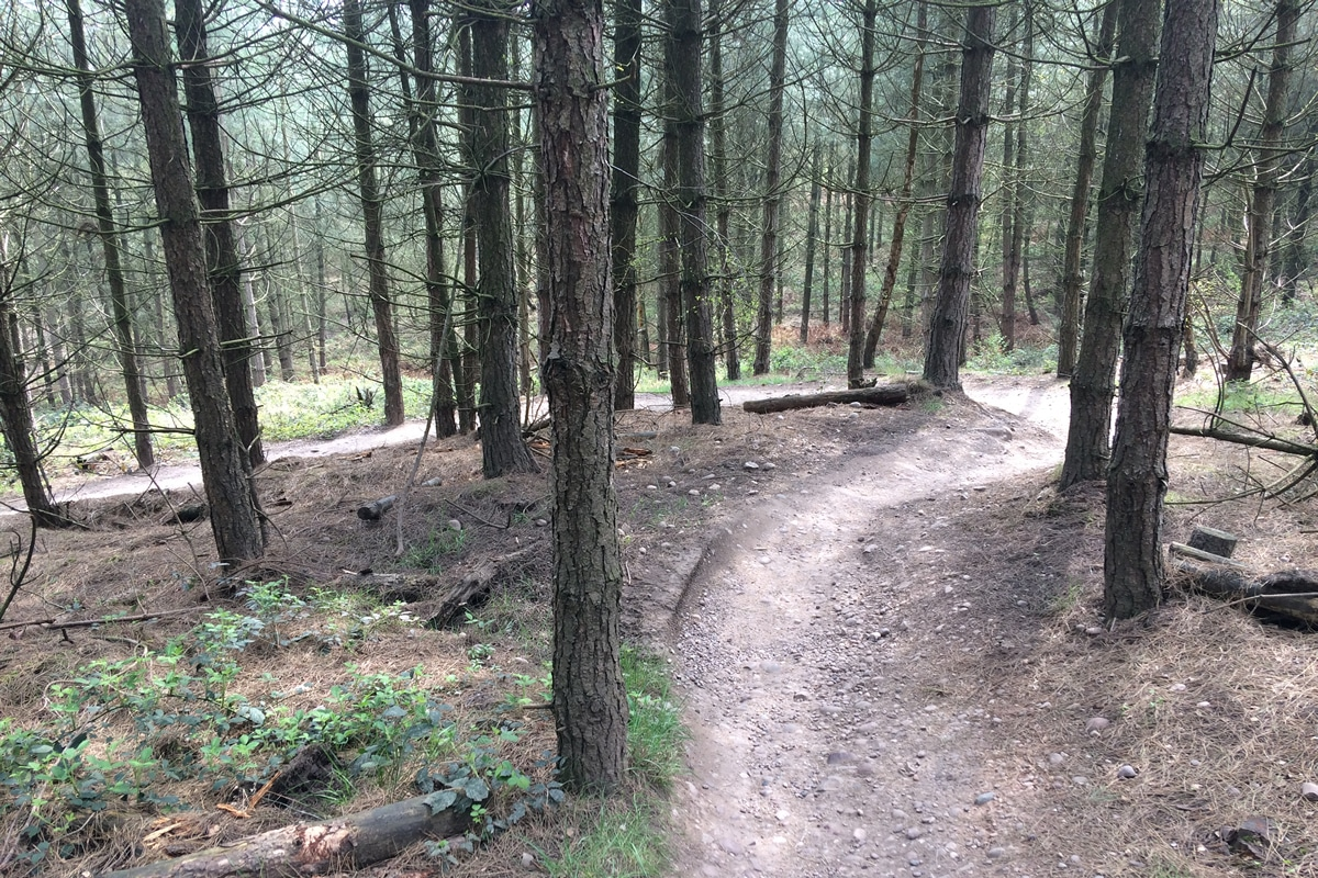 Part of 'High Voltage' section on Follow the Dog Trail