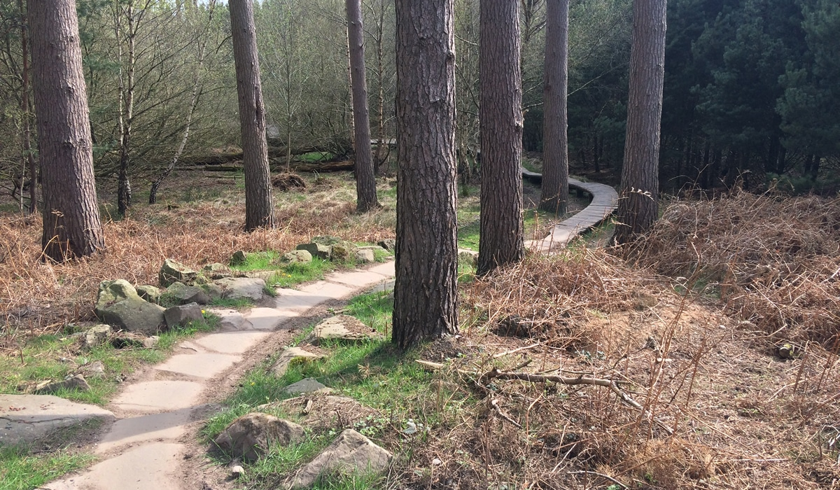 Cannock Chase Trails | Watch Out Trolls section on Follow the Dog Trail